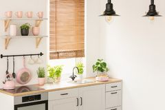 Plants on wooden countertop in kitchen interior with blinds, lam. Ps and pink accessories. Real photo concept stock photos