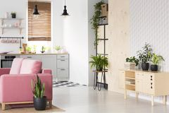 Plants on wooden cupboard in white flat interior with pink sofa next to kitchenette. Real photo royalty free stock photo