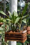 Plants on wooden pot Stock Photos
