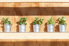 Plants on a wooden shelf Stock Photography