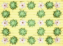 Plants on yellow wooden background. Abstract background. Royalty Free Stock Image