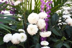 Plantsandflowers Imagen de archivo