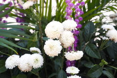 Plantsandflowers. Plants flowers nature gerden bouquet Stock Image
