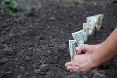 Plantting dollars Royalty Free Stock Photo
