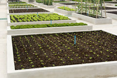 Plantula che cresce sul suolo marrone fotografia stock