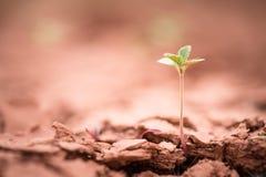 plantula che cresce sulla terra della crepa Fotografia Stock