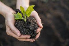Plantula concetto a disposizione, di ecologia e dell'ambiente immagini stock