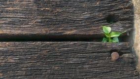 Plantula in di legno inutilizzato immagini stock