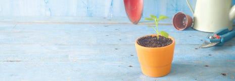 Plantula e strumenti di giardinaggio Fotografie Stock