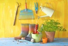 Plantula ed utensili di giardinaggio Immagini Stock