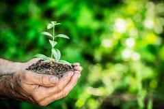 Plantula in mani contro il fondo verde della molla Immagine Stock Libera da Diritti