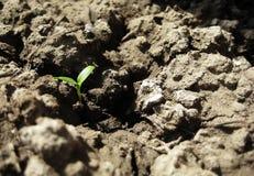 Plantula su siccità Immagine Stock Libera da Diritti