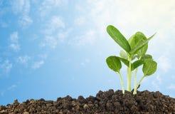 Plantule che crescono contro il cielo blu Fotografia Stock Libera da Diritti