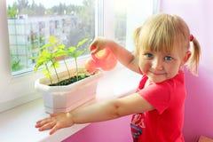 Plantule d'innaffiatura della bambina in vaso Deserto sabbioso dietro la finestra di stanza dove vita della bambina immagini stock libere da diritti