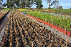 Plantule dell'azienda agricola del giardino Fotografia Stock