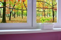 Plantule delle querce sul finestra-davanzale e della vista alla foresta della quercia fotografie stock libere da diritti
