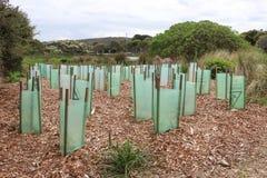 Plantule protette dalle maniche di plastica ad Allen Noble Sanctuary Fotografie Stock