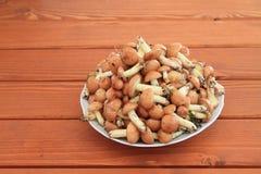 Planty of mushrooms Stock Image