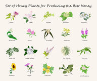 Planty Satz des Honigs Lizenzfreie Stockbilder