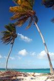 plażowe palmy Zdjęcie Stock