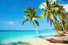 plażowy tropikalny Obrazy Royalty Free
