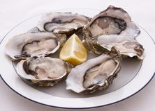 Plaque des huîtres Photo stock