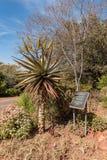 Plaque, montrant la chanson de prière, et un aloès au monument de Voortrekker photos libres de droits