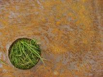 Plaque rouillée en acier avec l'herbe Image libre de droits