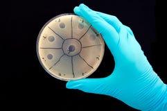 Plaques de bactériophage Photographie stock libre de droits