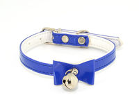Plascti collar for pets Royalty Free Stock Photography