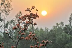 Plash flower and sunset at purulia west bengal