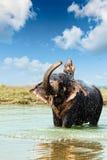Plaskande vatten för elefant, medan ta badet i den Chitwan nationalparken, Nepal Arkivbilder