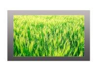Plasma TV with Spring Landscape Display Stock Images