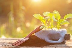 Plast- återanvänder begrepp: Folk som planterar grönsaken i plast- b royaltyfri fotografi