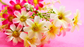 Plast- blommabakgrund Royaltyfria Bilder
