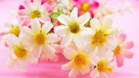 Plast- blommabakgrund Royaltyfria Foton