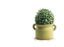 Plast- busketräd royaltyfri foto