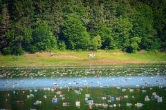 Plast-flaskor på sjön Sjöyttersida som täckas av plast- flaskor Royaltyfri Foto