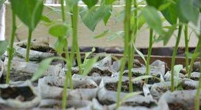 Plast- packar som innehåller plantor royaltyfria foton