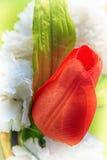 Plast- röd ros Arkivbild