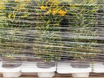 Plast- slågna in växter ordnar till för export royaltyfri bild