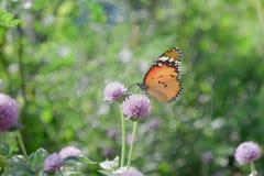 Plast- stilimage- tätt upp av fjärilen på blomman, naturbakgrund royaltyfri foto