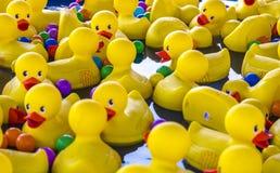 Plast- Toy Ducks Royaltyfria Bilder