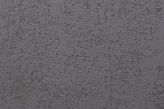 Plaster bark beetle Stock Images