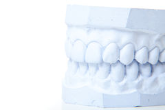 Plaster cast of perfect teeth Royalty Free Stock Image