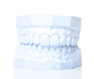 Plaster cast of perfect teeth Stock Photography