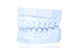 Plaster cast of teeth Stock Photos