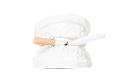 Plaster cast of teeth with cracked cigarette Stock Image