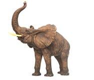 Plaster sculpture elephant Stock Photography