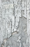 Plaster Wall Stock Image